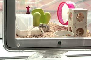Hamster on Display